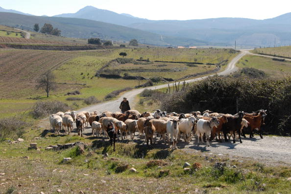 Country Road「Zamora Goatherd」:写真・画像(2)[壁紙.com]