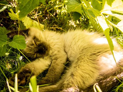 Kitten「young cat in the garden」:スマホ壁紙(18)