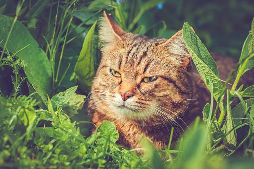 Kitten「夏の若い猫」:スマホ壁紙(19)