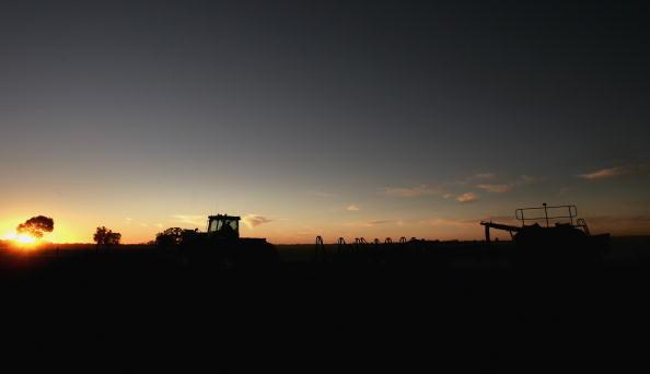 Canola「Victorian Farmers Battle Drought Conditions」:写真・画像(13)[壁紙.com]
