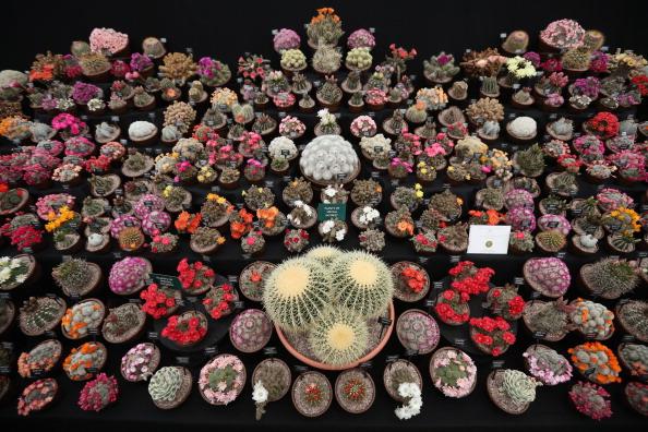 ライフスタイル「Flowers And Gardens Bloom At The Annual RHS Chelsea Flower Show」:写真・画像(16)[壁紙.com]