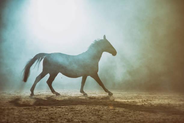 Horse in the fog:スマホ壁紙(壁紙.com)