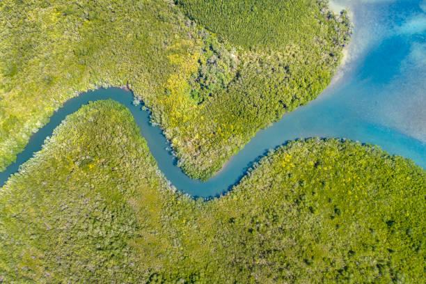 Mangrove River Delta, Queensland, Australia:スマホ壁紙(壁紙.com)