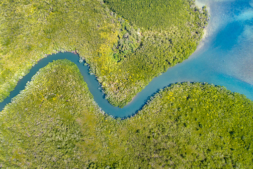 Queensland「Mangrove River Delta, Queensland, Australia」:スマホ壁紙(1)