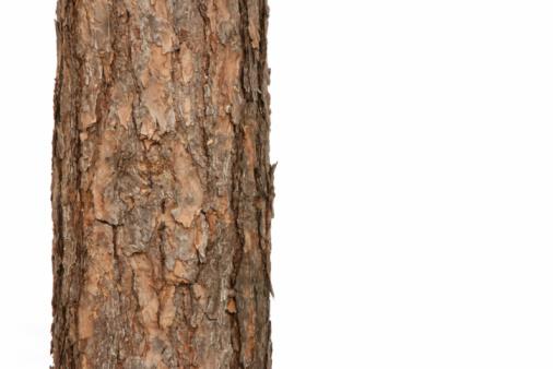Log「pine tree」:スマホ壁紙(9)