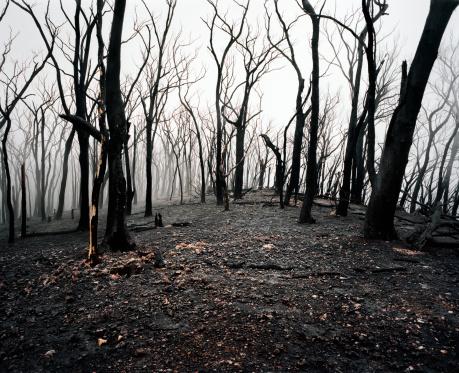Forest Fire「Aftermath, Black Saturday Bush Fires」:スマホ壁紙(18)