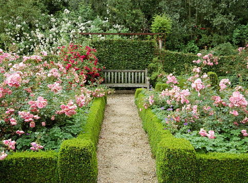 薔薇「Rose 園」:スマホ壁紙(11)