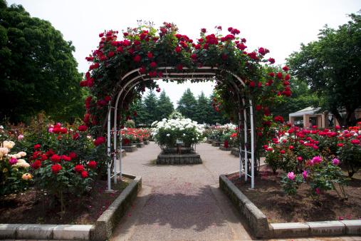 Grove「Rose Garden」:スマホ壁紙(5)