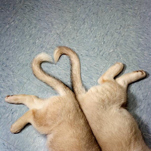 Two puppy tails in heart shape:スマホ壁紙(壁紙.com)