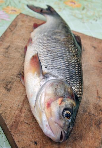 Carp「Fresh-water predatory fish ide on a chopping board」:スマホ壁紙(18)