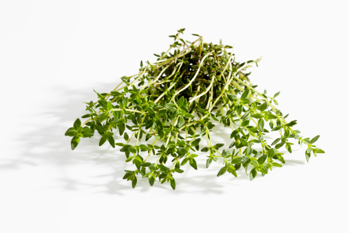Thyme「Thyme on white background, close up」:スマホ壁紙(10)