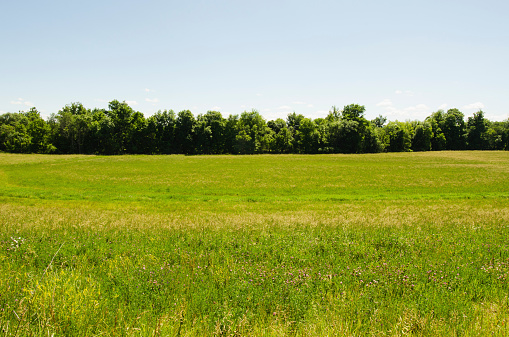 Agricultural Field「USA, New York, Hudson, View of meadow」:スマホ壁紙(10)