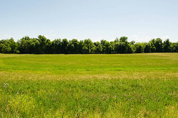 USA, New York, Hudson, View of meadow:スマホ壁紙(壁紙.com)
