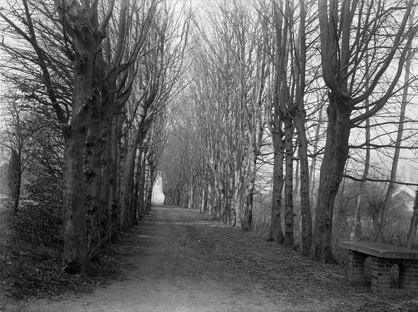 Country Road「Treelined Avenue」:写真・画像(3)[壁紙.com]
