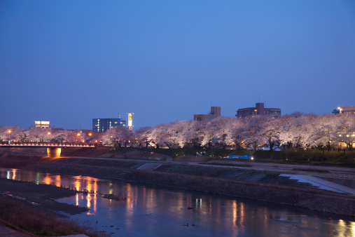 夜桜「Treelined Asuwa river at night, Fukui Prefecture, Honshu, Japan」:スマホ壁紙(11)