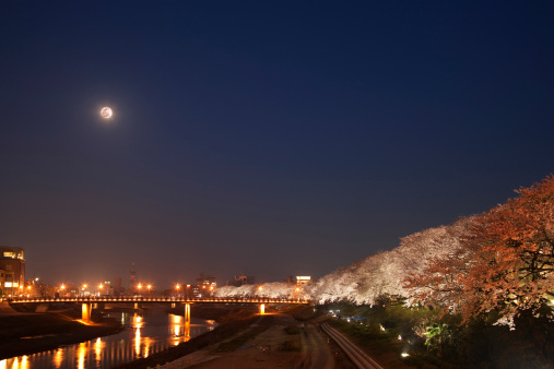夜桜「Treelined Asuwa river at night, Fukui Prefecture, Honshu, Japan」:スマホ壁紙(12)