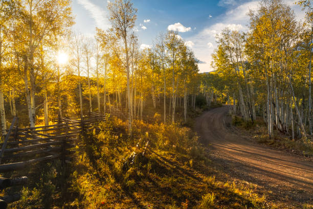 Rail fence and rural road at sunrise in aspen forest:スマホ壁紙(壁紙.com)