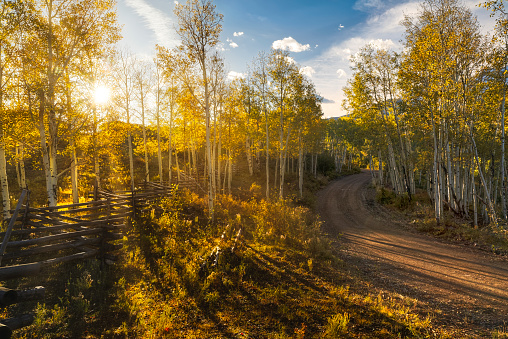 Uncompahgre National Forest「Rail fence and rural road at sunrise in aspen forest」:スマホ壁紙(9)