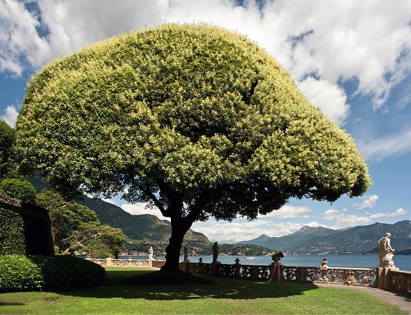 Architectural Feature「Holm Oak In The Garden Of The Villa Del Balbianello」:写真・画像(19)[壁紙.com]