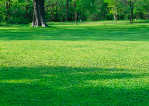 Grove「Lawn」:スマホ壁紙(0)