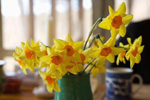 Daffodils on breakfast table:スマホ壁紙(壁紙.com)