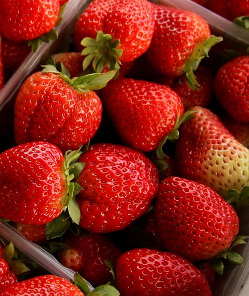 新鮮「Palestinian Farmers Harvest Strawberries」:写真・画像(4)[壁紙.com]