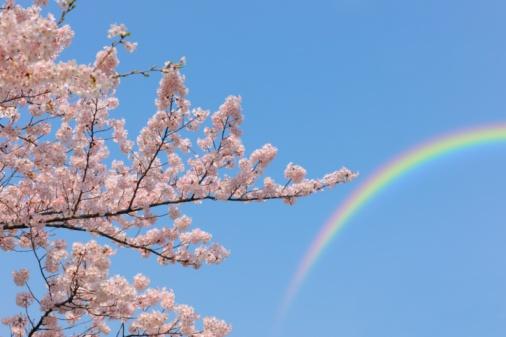 虹「Yoshino Cherry blossom and a rainbow at Ueno Park, Tokyo Prefecture, Japan」:スマホ壁紙(19)