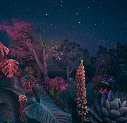 Fantasy「Surreal night forest」:スマホ壁紙(5)
