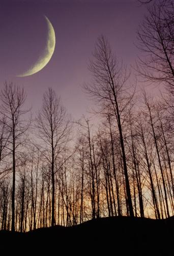 三日月形「Trees with branches」:スマホ壁紙(5)