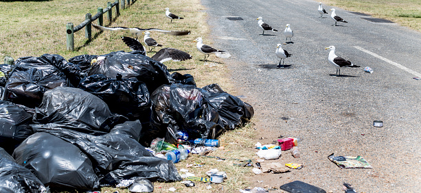 Empty Road「seagulls on stacking trash bags - bin bag in south Africa」:スマホ壁紙(17)