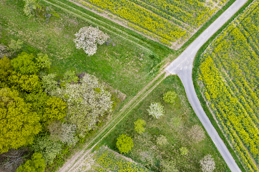 Country Road「Canola field and trees - aerial view」:スマホ壁紙(4)