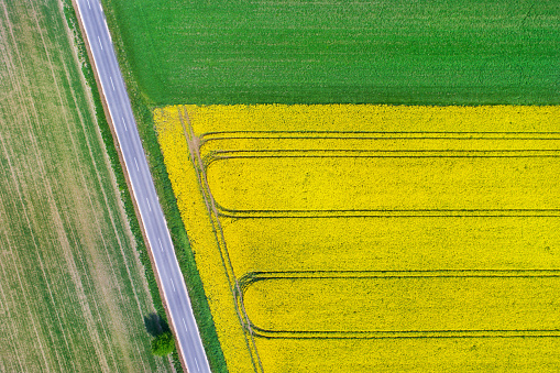 Harvest Festival「Canola field from above」:スマホ壁紙(6)