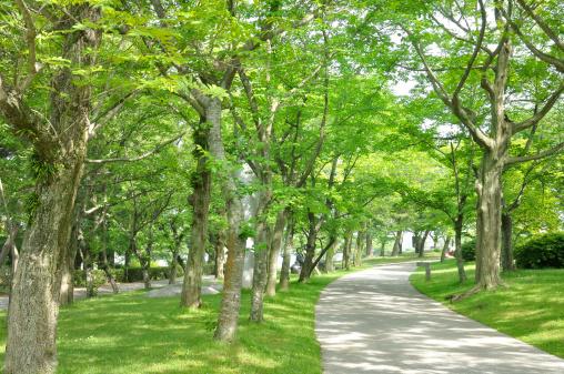 公園「Park」:スマホ壁紙(19)
