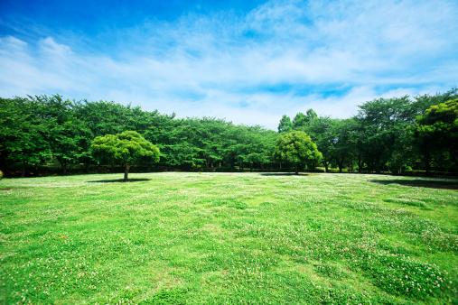 公園「Park」:スマホ壁紙(6)