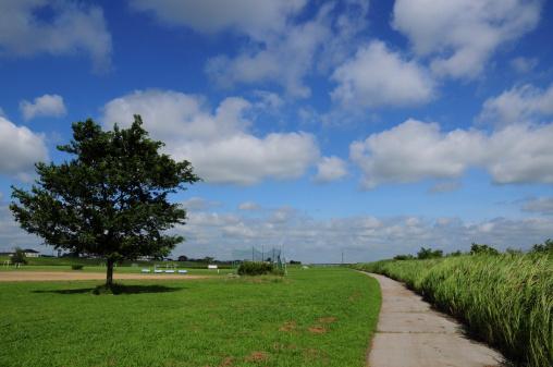 Katori City「Park」:スマホ壁紙(5)