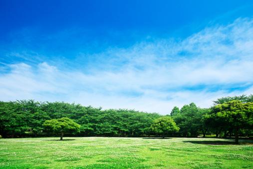 Japan「Park」:スマホ壁紙(13)