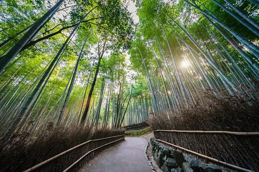 Grove「Kyoto Arashiyama Bamboo Forest Japan」:スマホ壁紙(12)