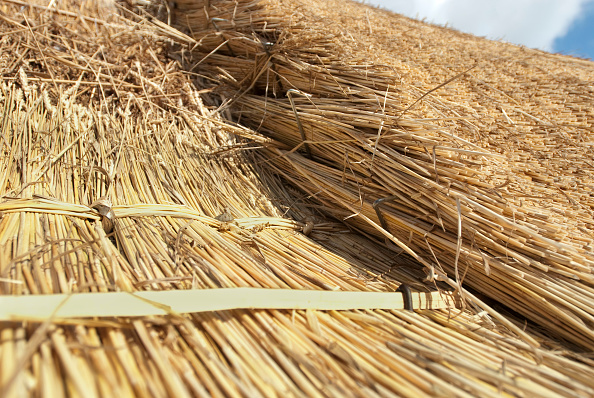Thatched Roof「Close up detail of a cottage thatched roof  Essex  England  UK」:写真・画像(14)[壁紙.com]