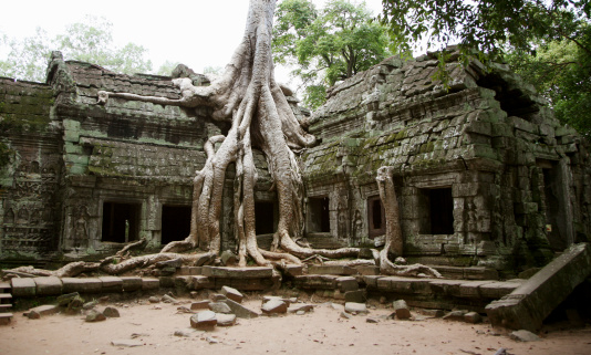 Ta Prohm Temple「Tree growing over ruins, Ta Prohm, Angkor Wat, Cambodia」:スマホ壁紙(5)
