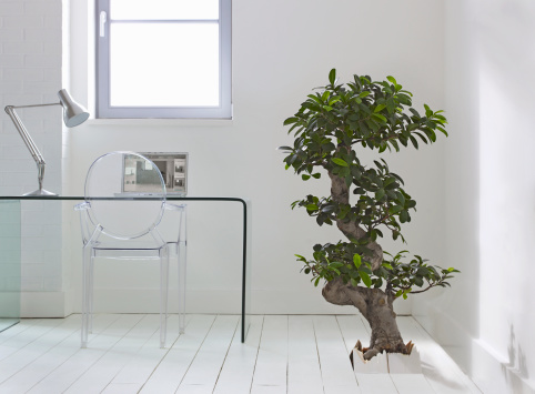 Desk Lamp「Tree growing through floor of house」:スマホ壁紙(9)