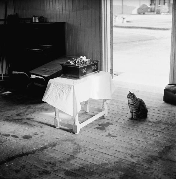 Square - Composition「Feline Funeral」:写真・画像(12)[壁紙.com]