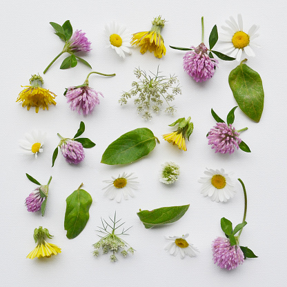 たんぽぽ「Arrangement of clover, daisies, dandelion and queen anne's lace wildflowers」:スマホ壁紙(13)
