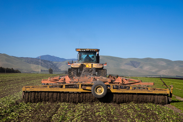 Salad「Immigrant Agricultural Workers Critical To U.S. Food Security Amid COVID-19 Outbreak」:写真・画像(11)[壁紙.com]