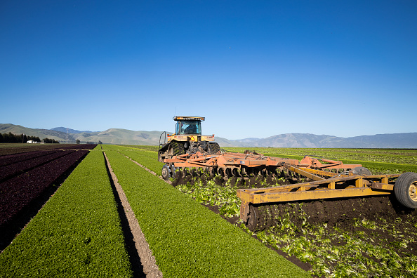 Salad「Immigrant Agricultural Workers Critical To U.S. Food Security Amid COVID-19 Outbreak」:写真・画像(16)[壁紙.com]