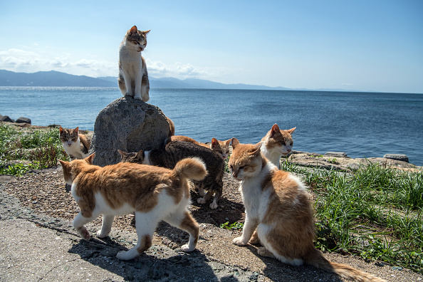 Offbeat「Japan's Island of Cats」:写真・画像(15)[壁紙.com]