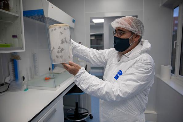 Madrid「Biotechnology Uses Caterpillars For Covid-19 Vaccine Development」:写真・画像(19)[壁紙.com]