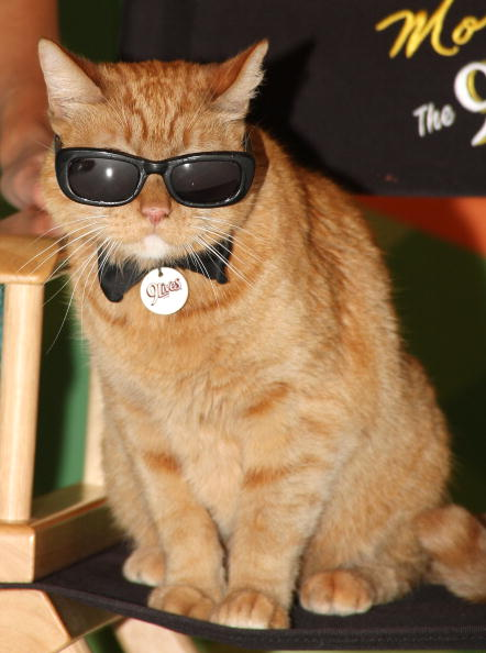 猫「9Lives Icon Morris The Cat On 'The Price Is Right' Set」:写真・画像(5)[壁紙.com]