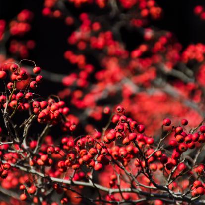 Rowanberry「Rowan fruits」:スマホ壁紙(13)