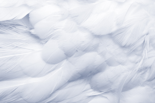 Feather「Goose Feathers Background」:スマホ壁紙(14)