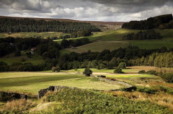 紅葉「Autumn Colours In The North Yorkshire Moors」:写真・画像(5)[壁紙.com]